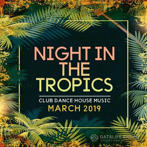 Night In The Tropics (2019)